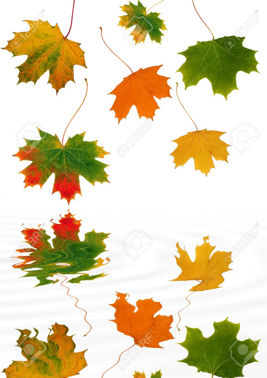 Abstract of maple leaves with the colors of Autumn reflected over soflty rippled water. Set against a white background. Stock Photo - 2765920