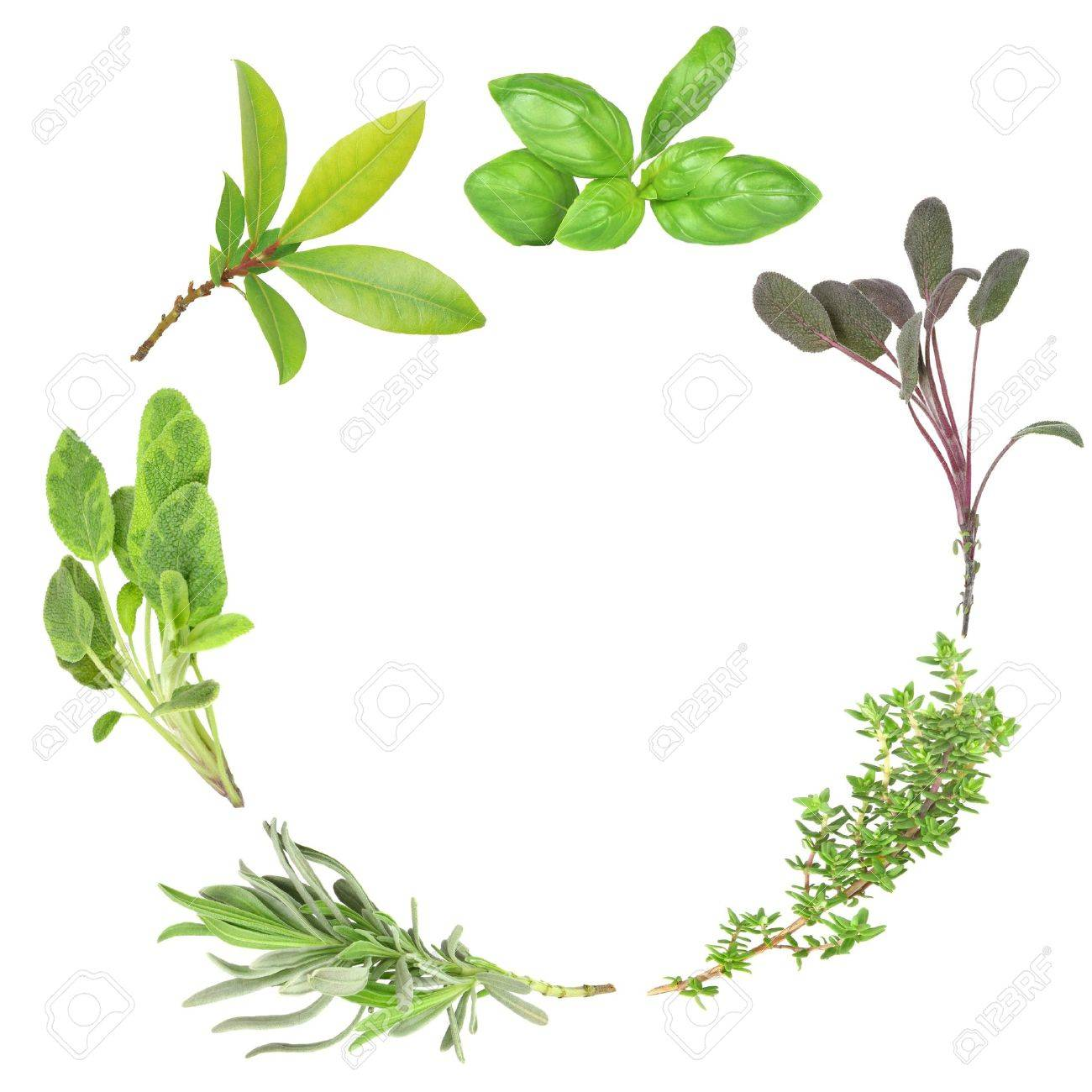 Organic herb garland of basil, purple sage, common thyme, lavender, variegated sage, and bay set against a white background. (Clockwise order) Stock Photo - 3179525