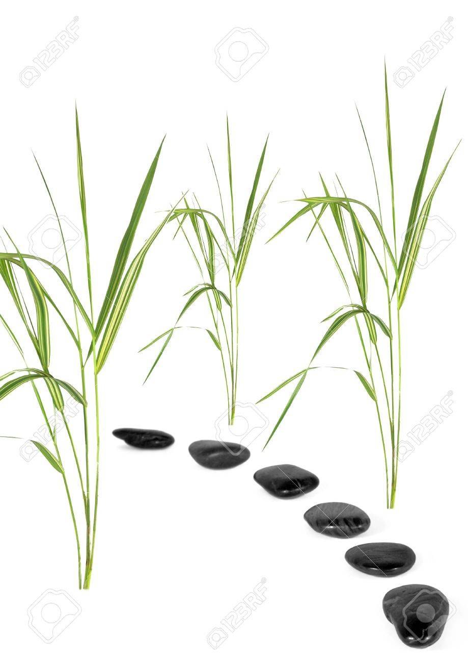 Zen abstract of bamboo grass with a black pebble path, over white background. Stock Photo - 3594446