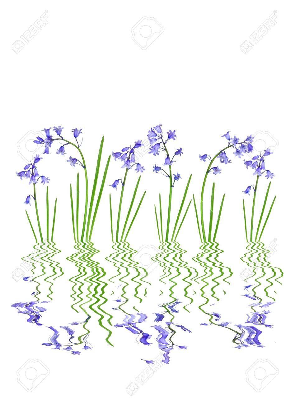 White Bluebells Flower Comousar