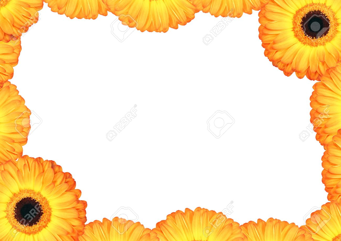 Yellow gerbera daisy flower and petal border with a central white stock photo yellow gerbera daisy flower and petal border with a central white background izmirmasajfo