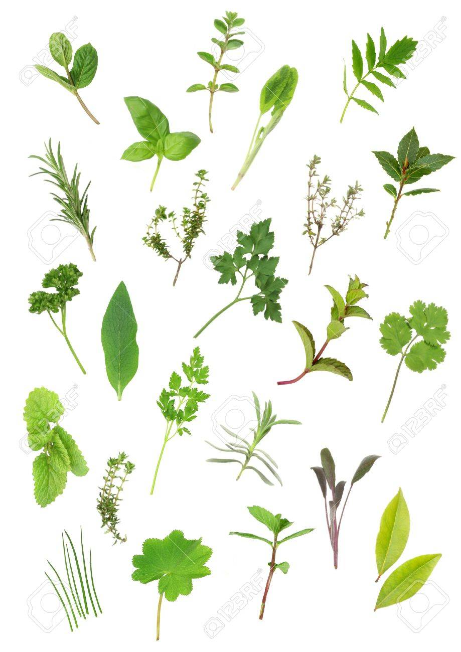 Herb Leaf Selection Of Parsley Lavender Sage Bay Mint Oregano