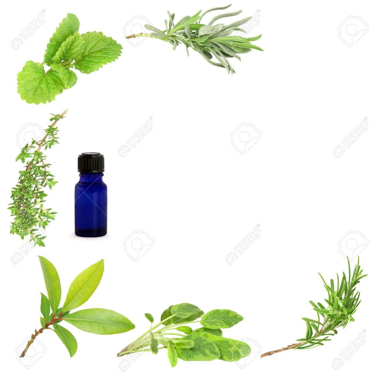 Herb Leaf Sprigs Of Lavender Lemon Balm Thyme Bay Sage And