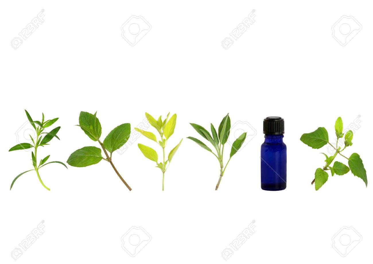 Herb leaf sprigs of hyssop, chocolate mint, golden marjoram, sage, and bergamot and aromatherapy essential oil glass bottle, over white background. Stock Photo - 4534934