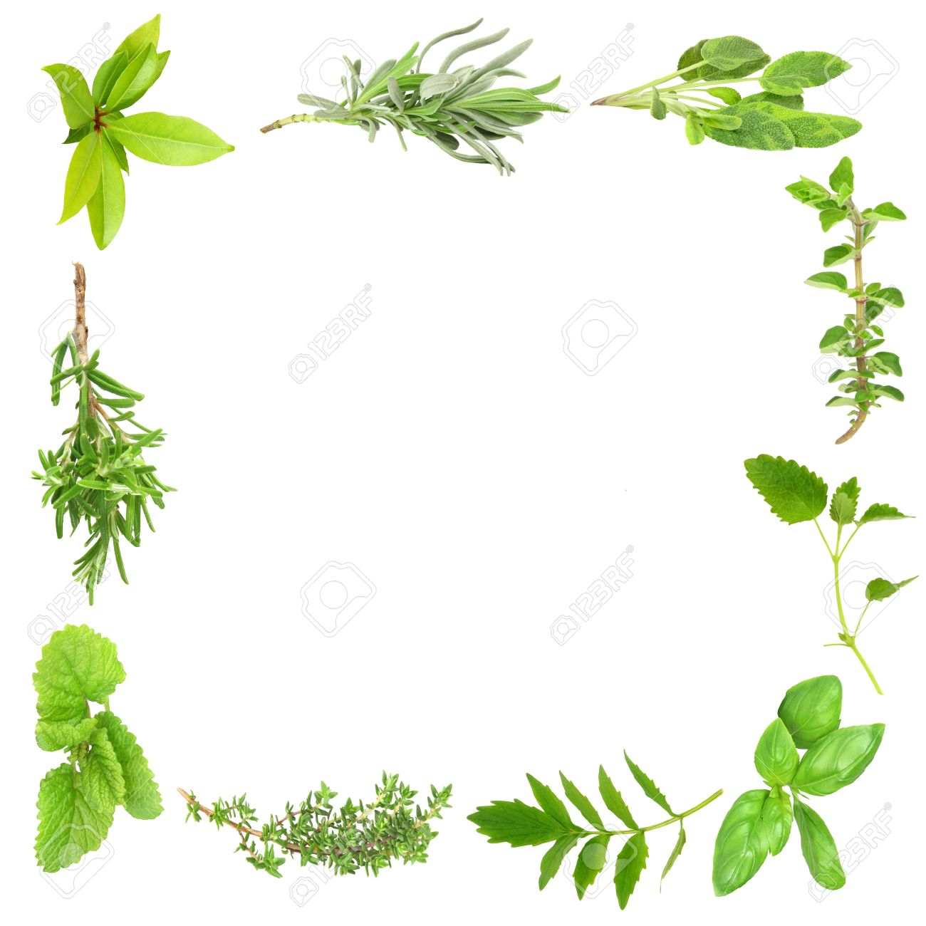 Herb Leaf Border Of Bay Leaves Lavender Sage Valerian Vallium
