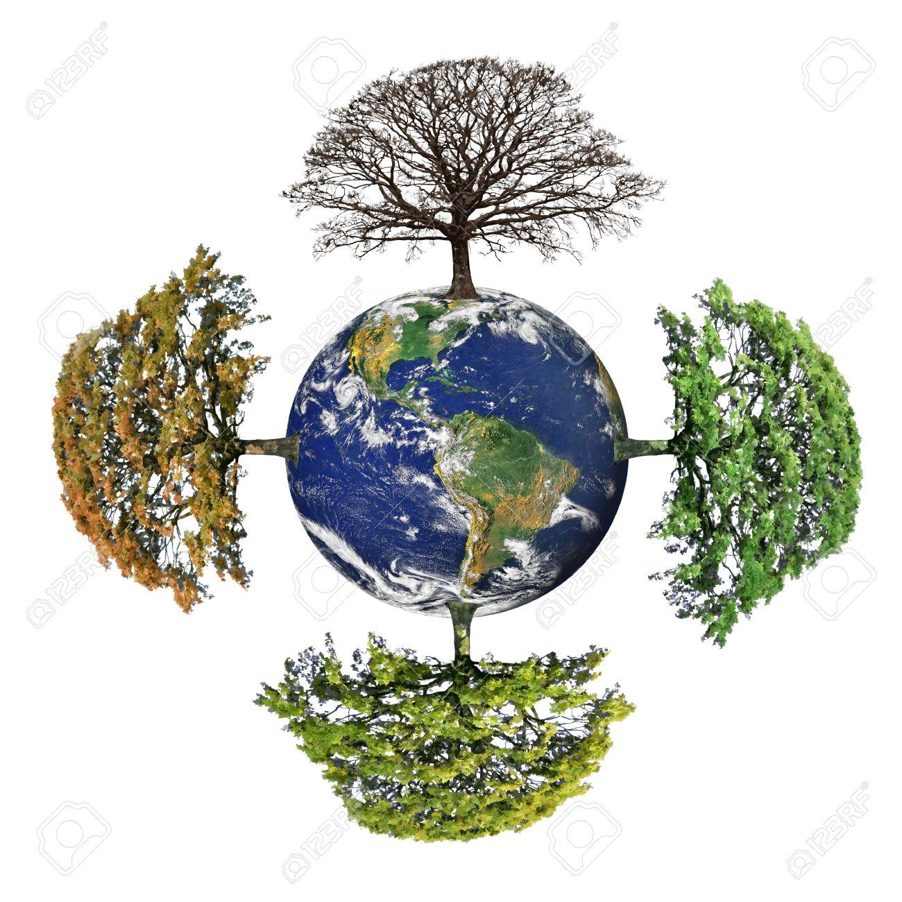 Roble resumen de las cuatro estaciones, primavera, verano, otoño y el invierno en un mundo del planeta tierra con el continente americano, más de fondo blanco. Foto de archivo - 5022791