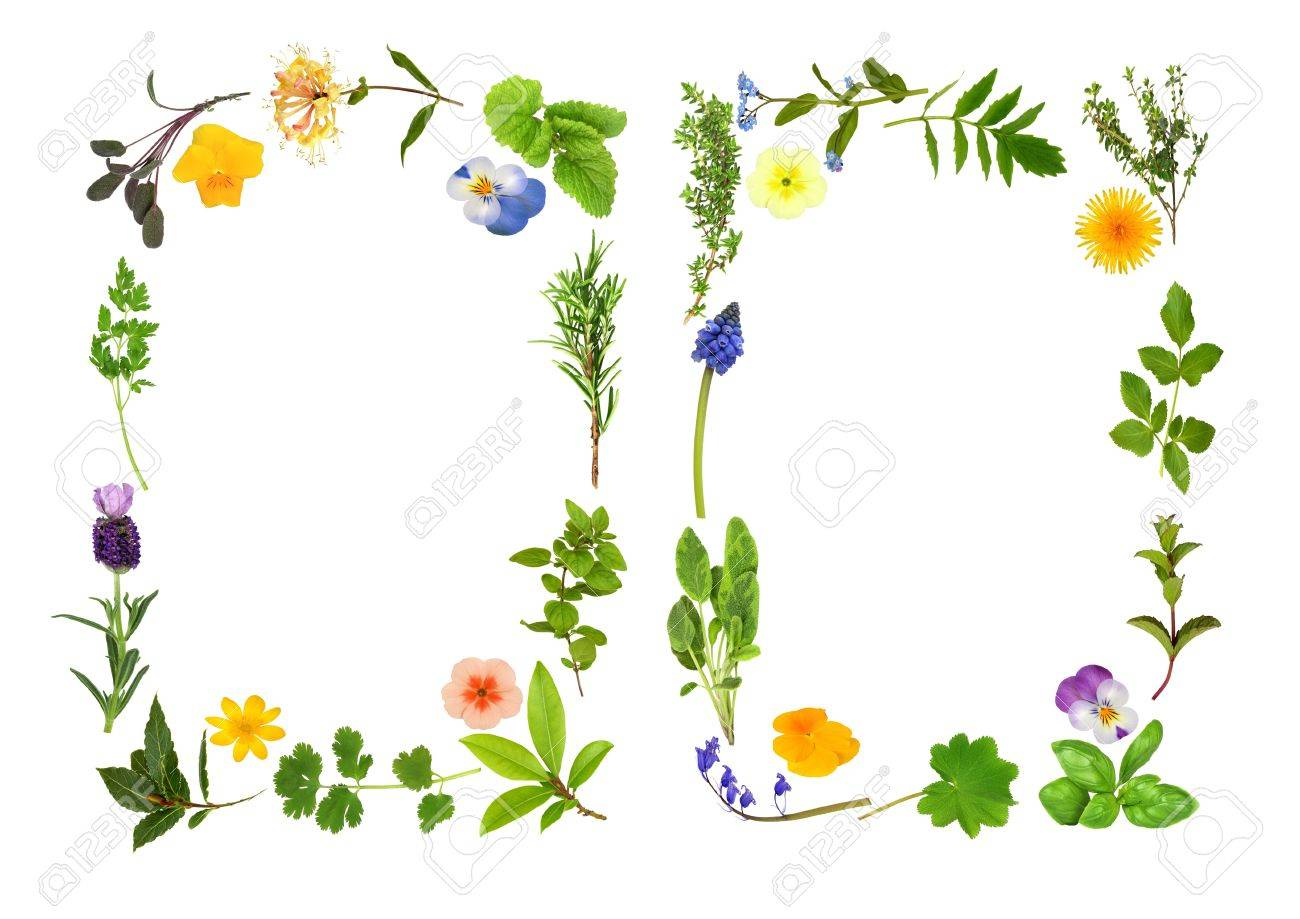 Herb leaf and flower selection forming two abstract borders, over white background. Stock Photo - 5534313