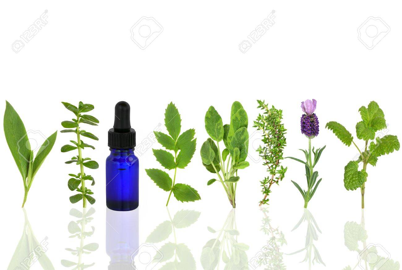 Herb leaf selection of comfrey, peppermint, valerian, sage, thyme, lavender and lemon balm with an aromatherapy essential oil glass dropper bottle, over white background. Stock Photo - 5866671