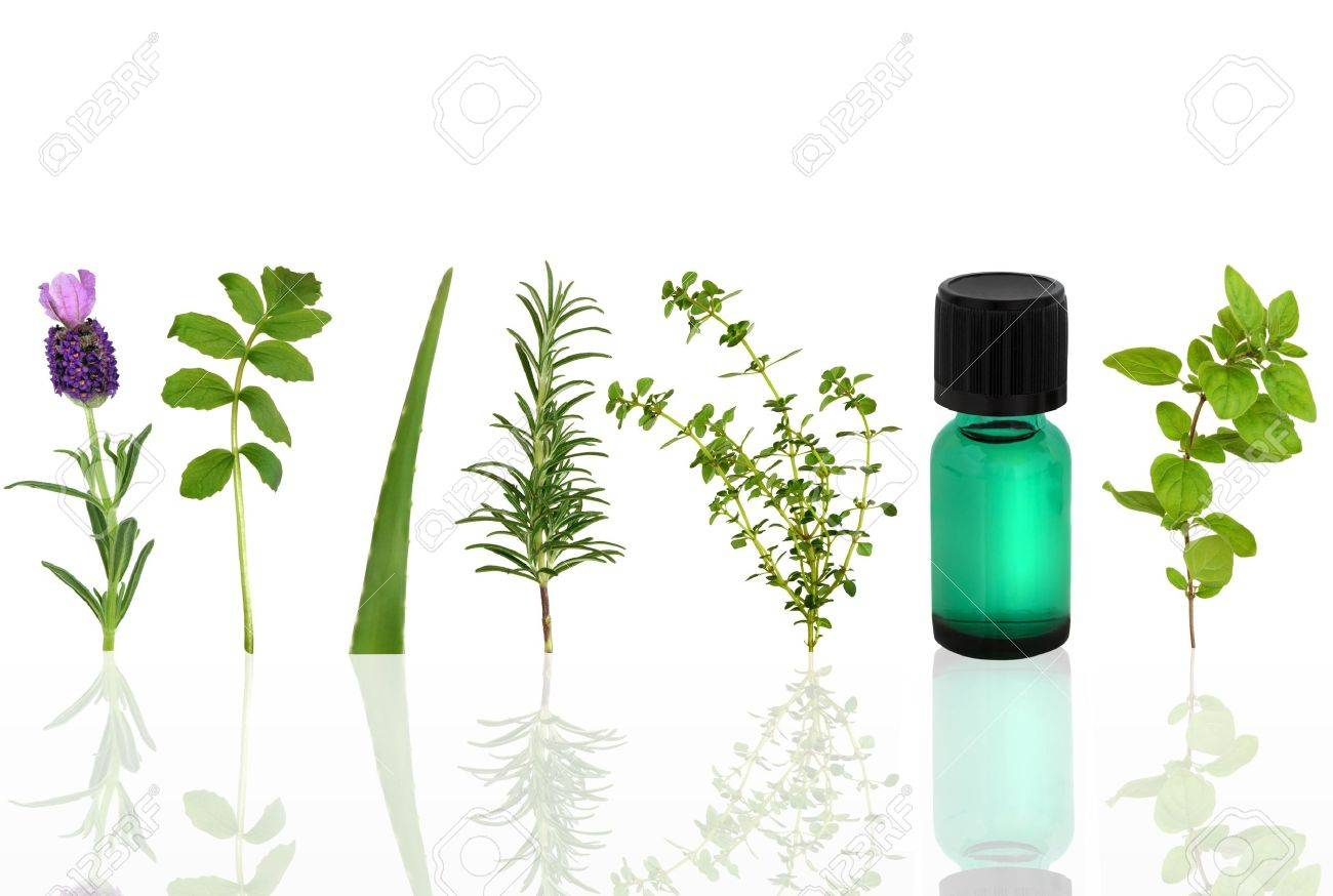 Herb leaf selection of lavender, valerian, aloe vera, rosemary, lemon thyme and marjoram with an aromatherapy essential oil glass dropper bottle, over white background. Stock Photo - 6078145
