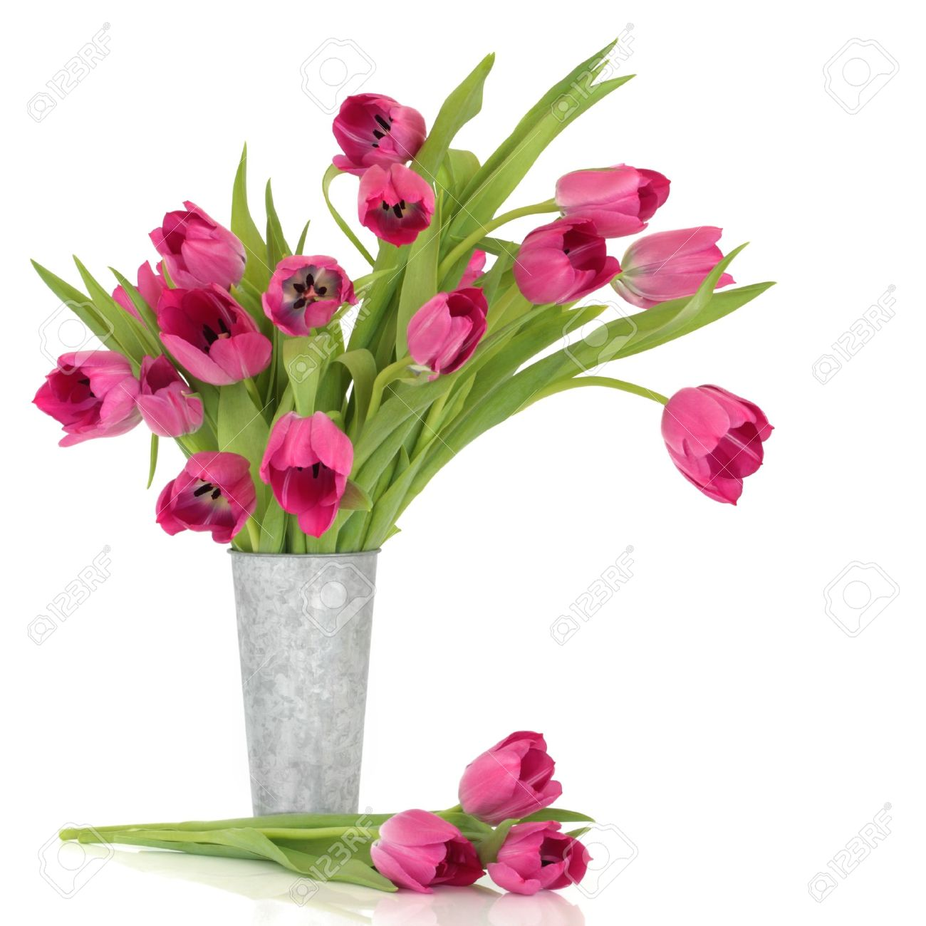 Pink tulip flowers in a distressed aluminum vase and scattered pink tulip flowers in a distressed aluminum vase and scattered over white background stock dhlflorist Image collections
