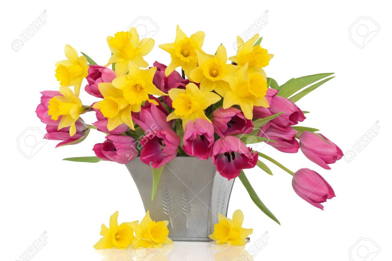 Tulip and daffodil flowers in a pewter vase, with loose daffodils, over white background. Stock Photo - 9131348