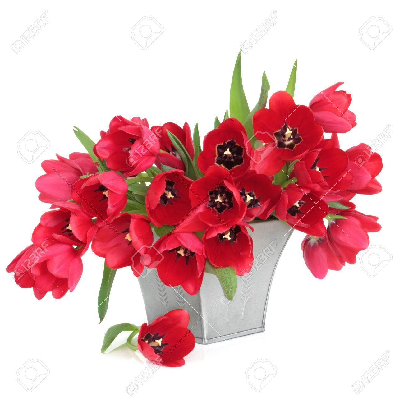 Tulipán Rojo Arreglo Floral En Un Vaso De Peltre Aislado Sobre Fondo Blanco