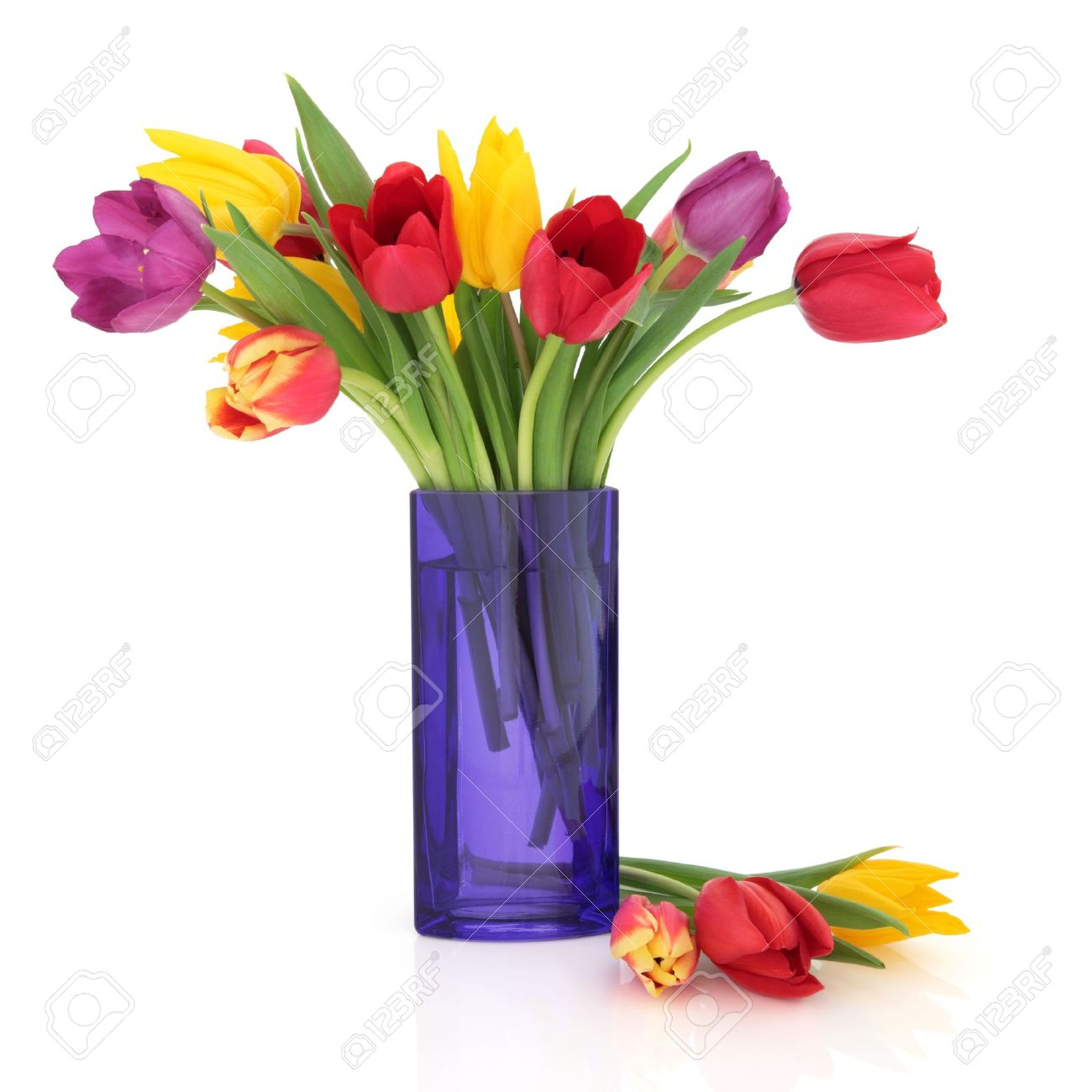 Tulip flowers in rainbow colours in a blue glass vase and loose isolated over white background. Stock Photo - 9601871