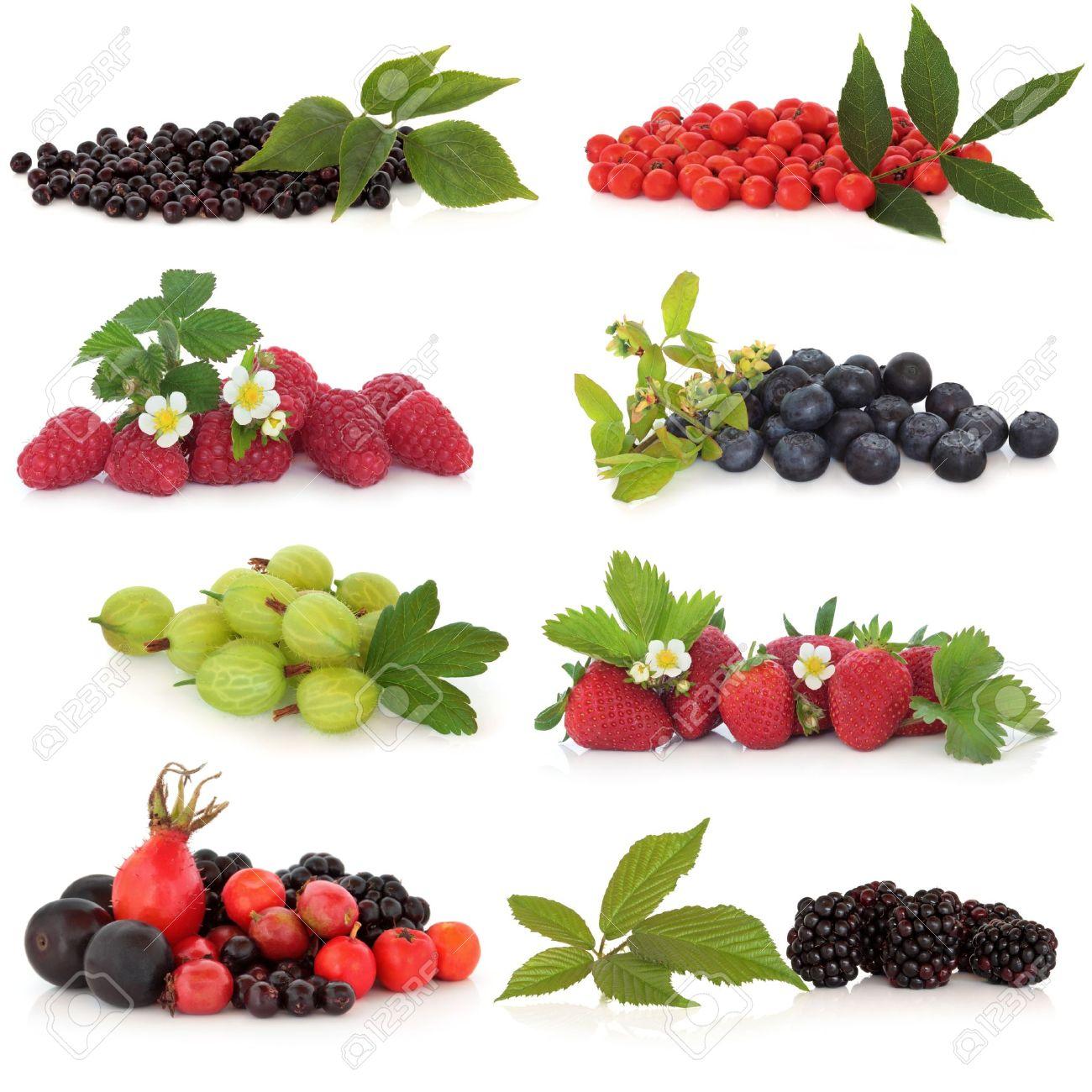 Raspberry, strawberry, gooseberry, blueberry, blackberry, elderberry, rowan, rose hip and sloe, fruit, isolated over white background. Stock Photo - 9945462