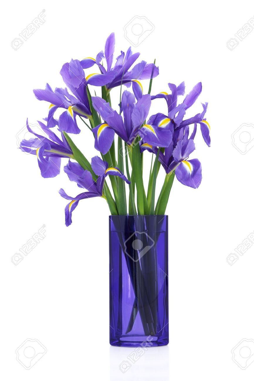 Iris Flower Arrangement In A Blue Glass Vase Isolated Over White