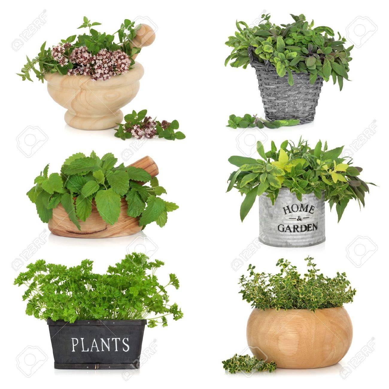 Herb Leaf Selection In Various Containers Including, Thyme, Sage, Parsley,  Oregano And