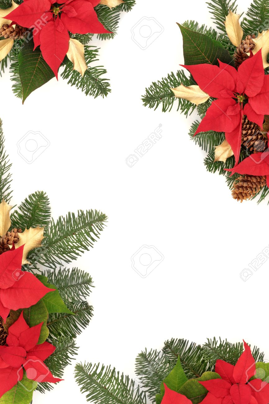 christmas border of poinsettchristmas border of poinsettia flower heads golden holly pine cones and