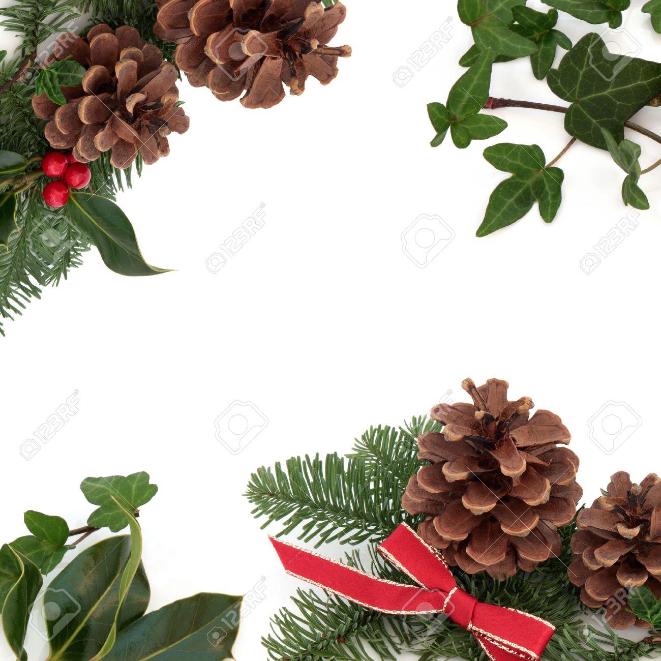 foto de archivo navidad decorativos frontera de acebo hiedra murdago pias de pino y abeto ramita de hojas de abeto con cinta roja aislada sobre fondo