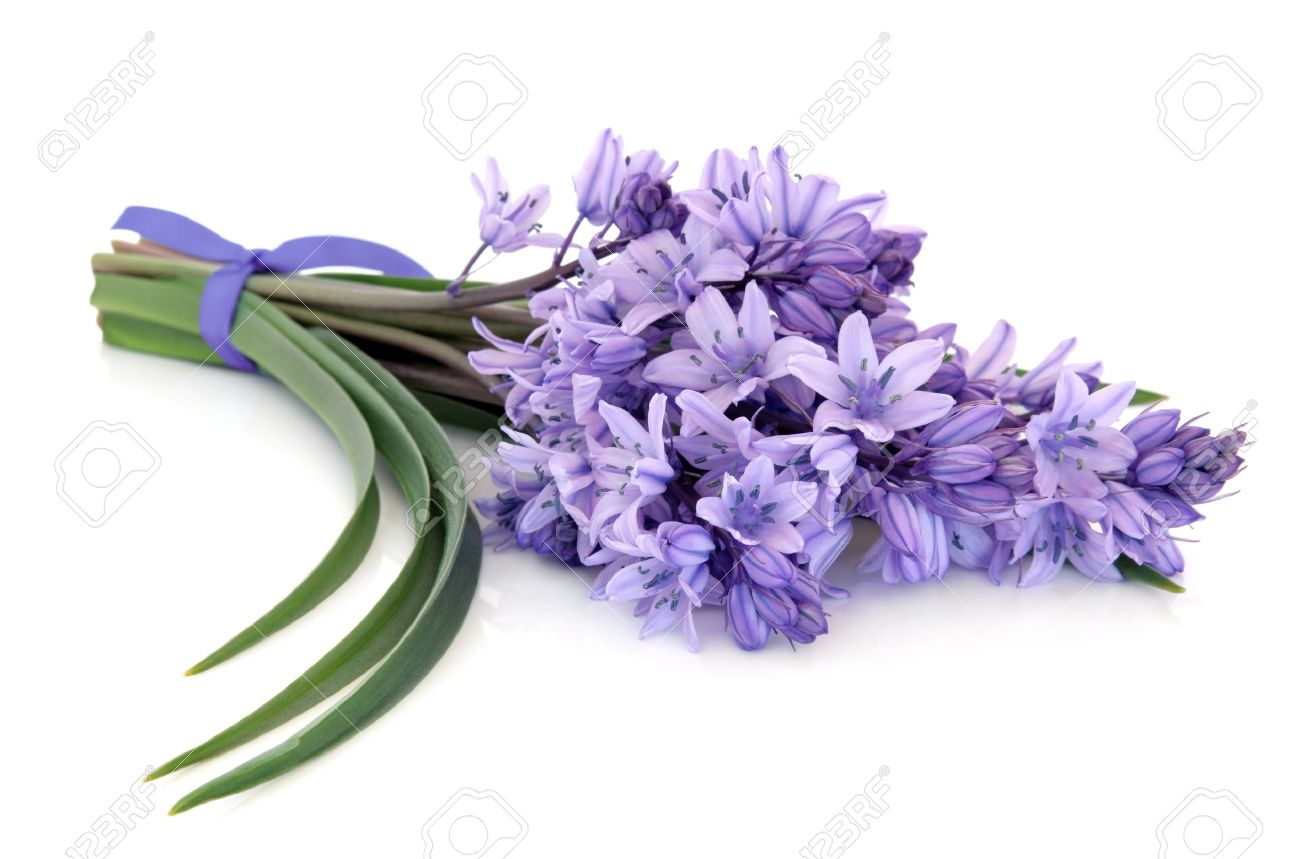 Bluebell flowers tied in a bunch over white background stock photo bluebell flowers tied in a bunch over white background stock photo 12420285 mightylinksfo Gallery