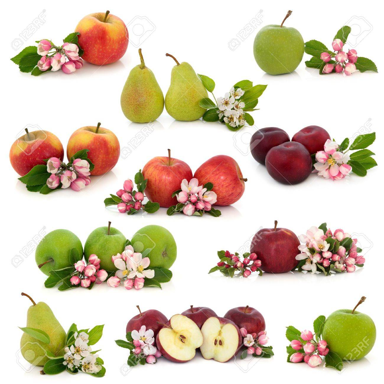 large collection of apple pear and plum fruit with corresponding