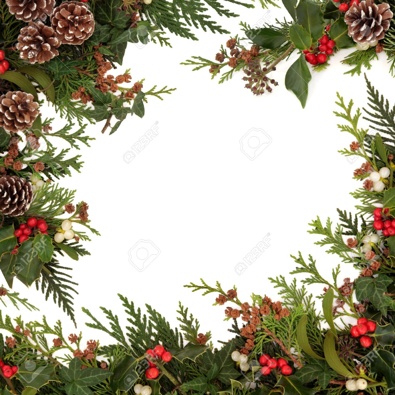 Why is holly a traditional christmas decoration - Winter And Christmas Traditional Border Of Holly Ivy Mistletoe And Cedar Cypress Leaf Sprigs