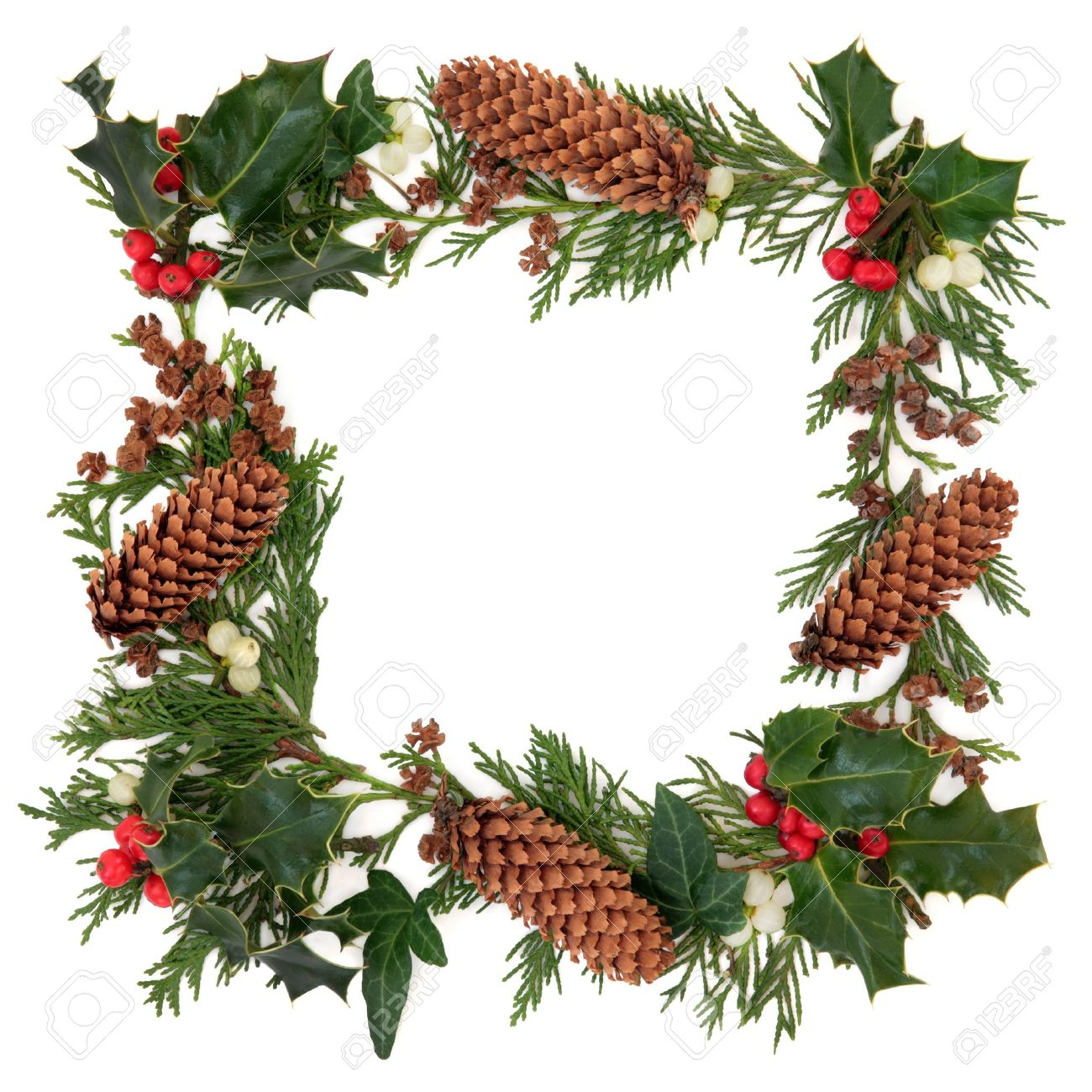 Winter and christmas decorative border of holly, ivy, mistletoe, cedar leaf sprigs and pine cones over white background Stock Photo - 15572742