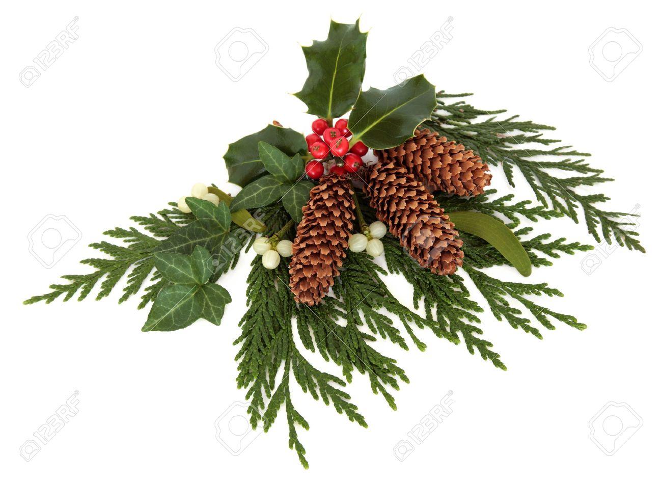 navidad decorativos disposicin de acebo el murdago la hiedra el cedro ciprs