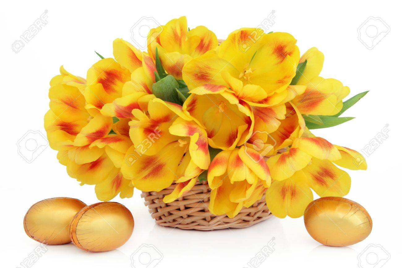 Yellow and red tulip flower arrangement in an easter basket with golden chocolate eggs over white background Stock Photo - 17699493