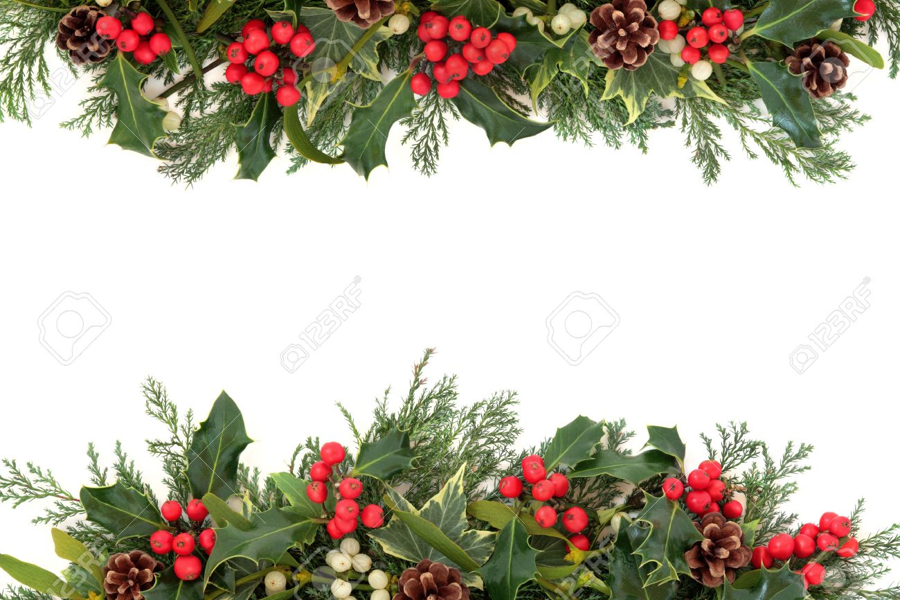 holly leaves stock photos royalty free holly leaves images and