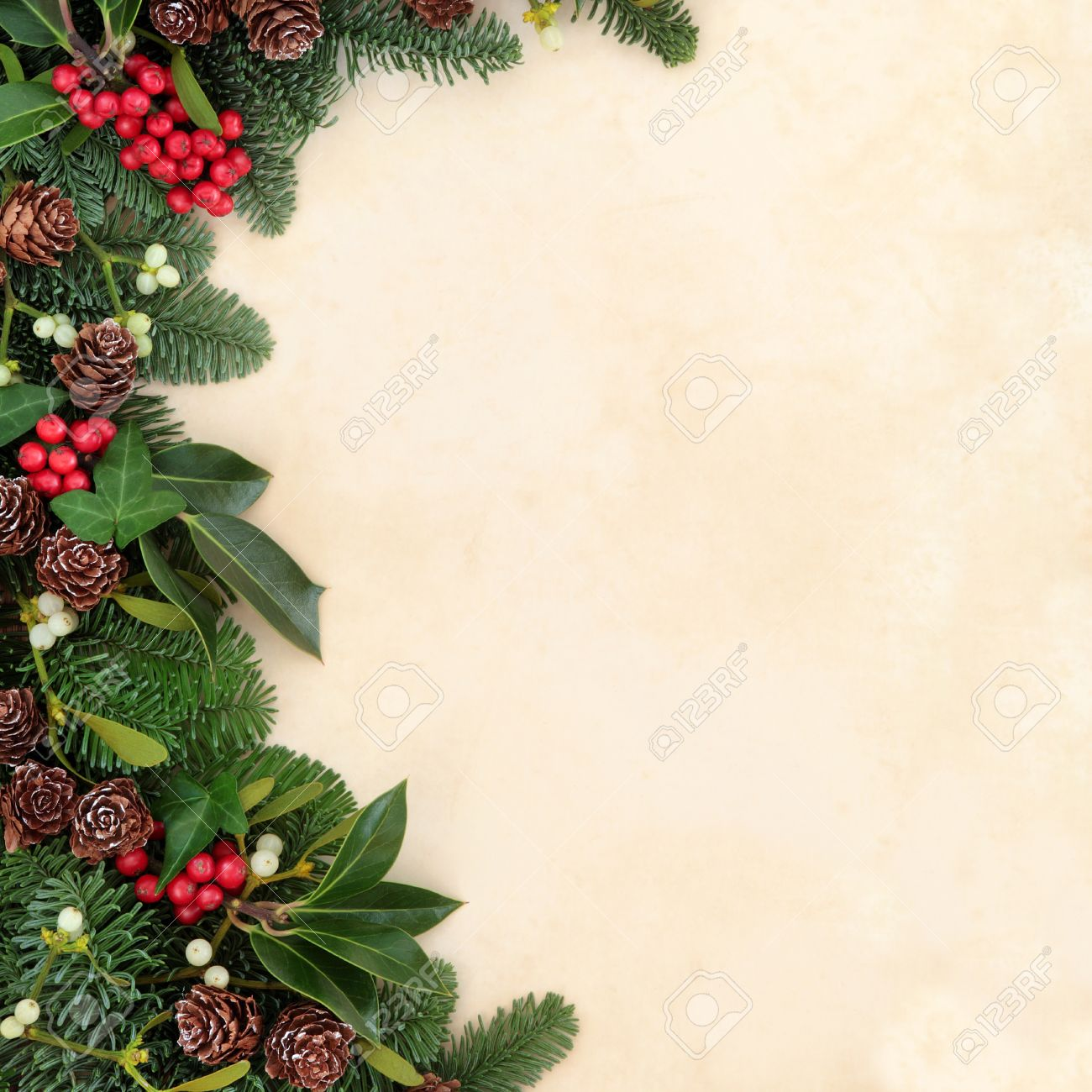 Christmas And Winter Background Border With Fir, Holly, Ivy ...