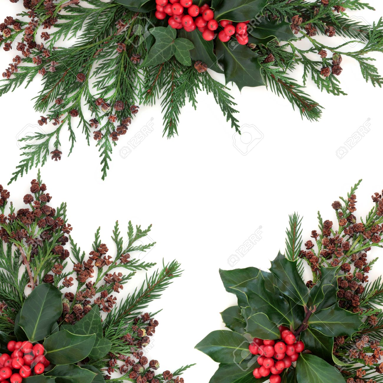 Christmas floral border stock photos freeimages com - Winter And Christmas Floral Border With Holly And Red Berries Ivy Fir And Cedar