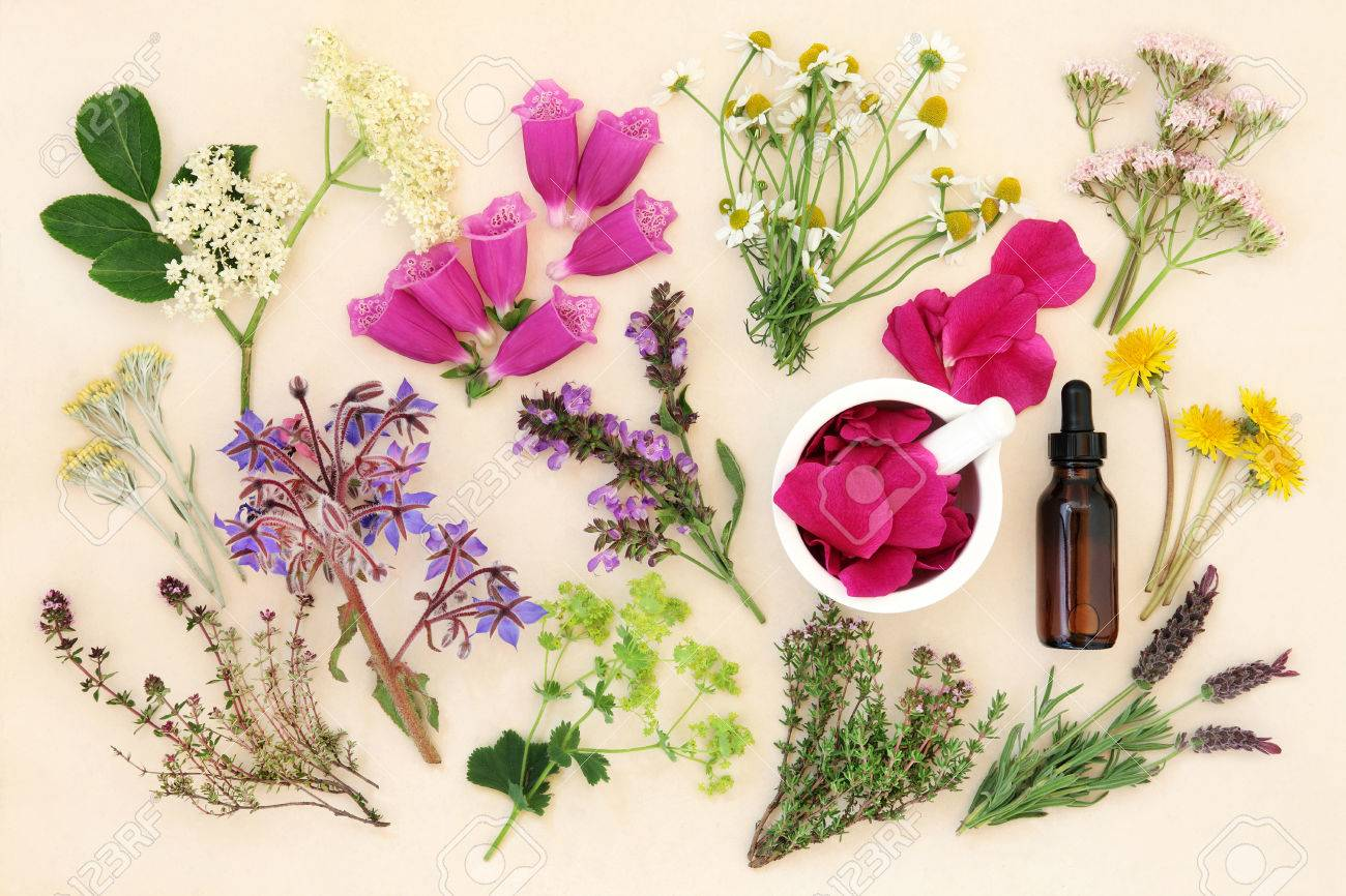 Medicinal flower and herb selection with dropper bottle and mortar with pestle, used in alternative herbal medicine over handmade cream paper background. - 48131841