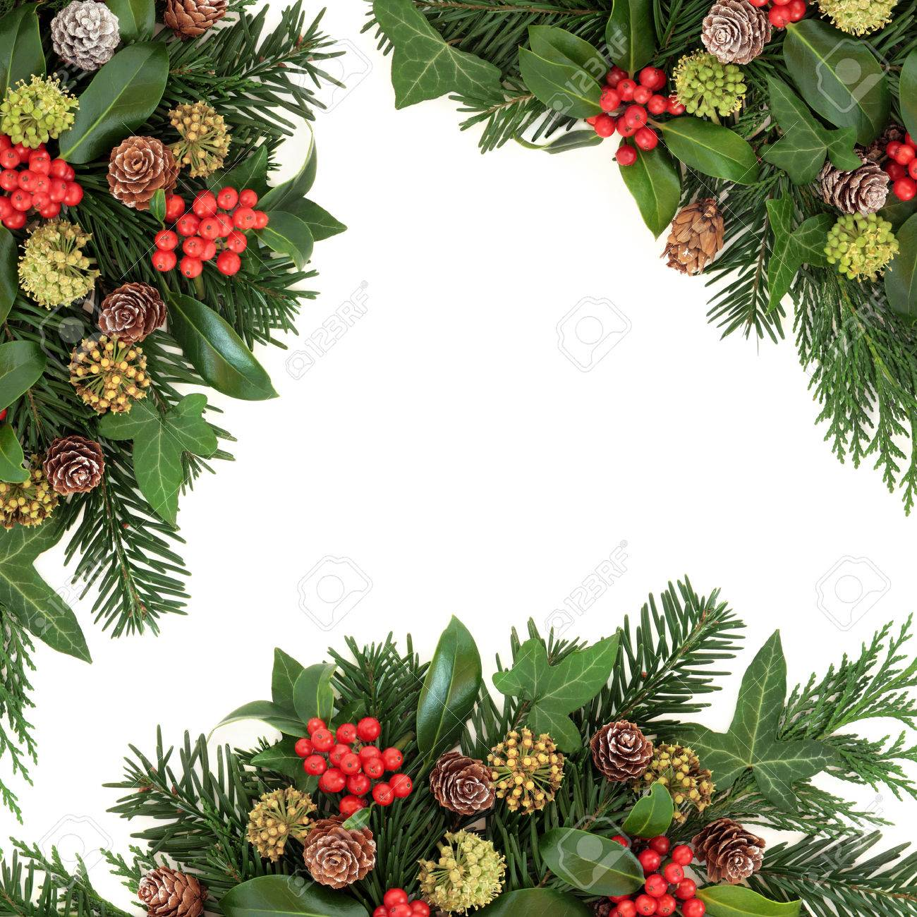 Why is holly a traditional christmas decoration - Traditional Winter And Christmas Background Border With Flora Of Holly Ivy Cedar Cypress