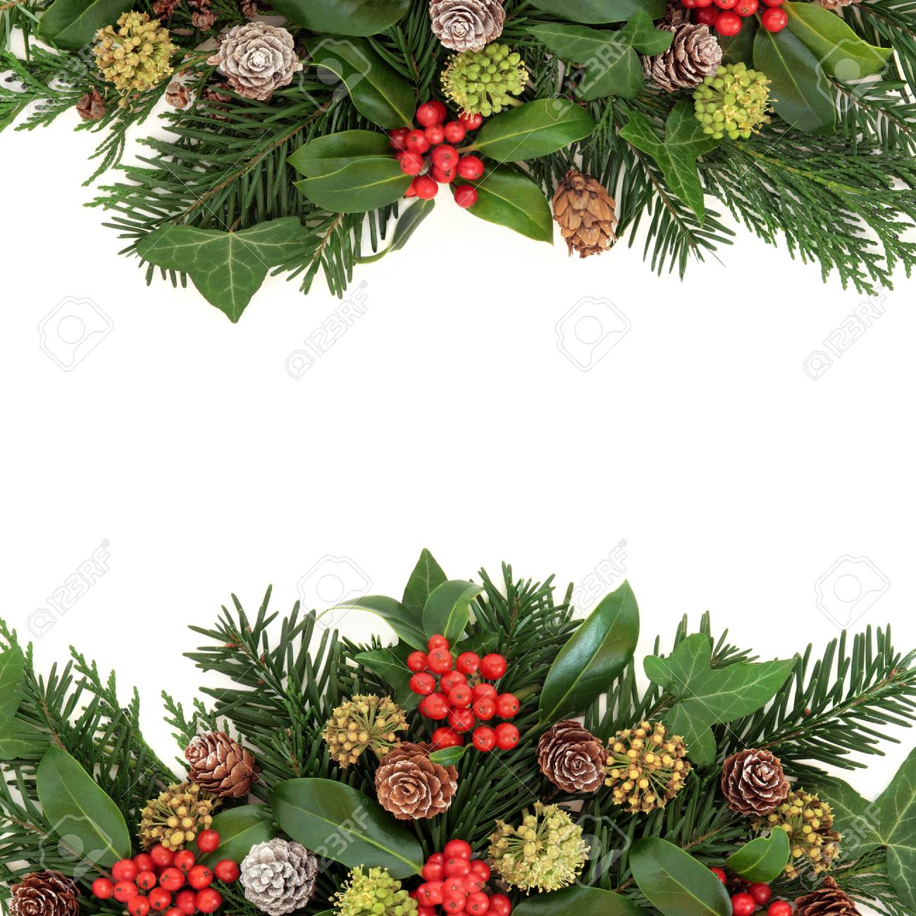 Christmas Greenery.Winter And Christmas Greenery Border With Holly Ivy Pine Cones