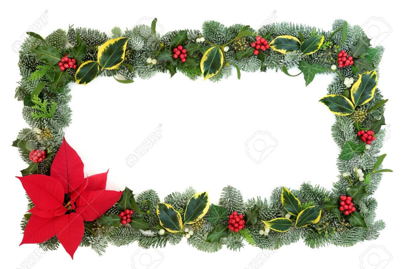 Poinsettia Flower Border With Snow Covered Spruce Fir Holly