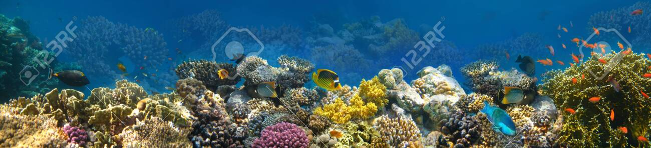 Underwater world. Coral fishes of Red sea. Egypt - 143299907
