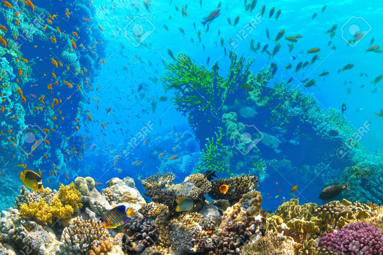 Underwater world. Coral fishes of Red sea. Egypt - 148094234
