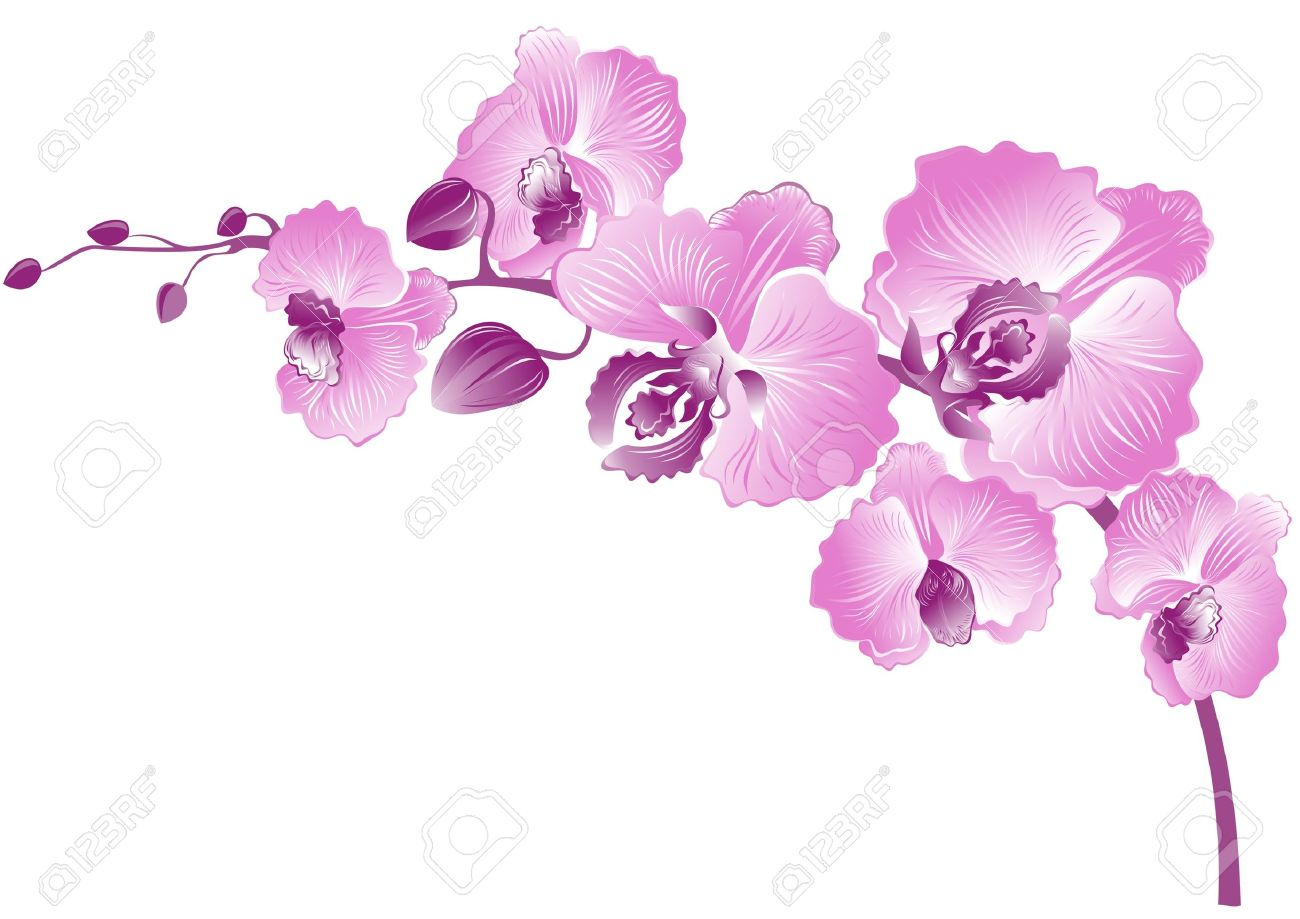 4,115 Pink Orchid Stock Vector Illustration And Royalty Free Pink ...