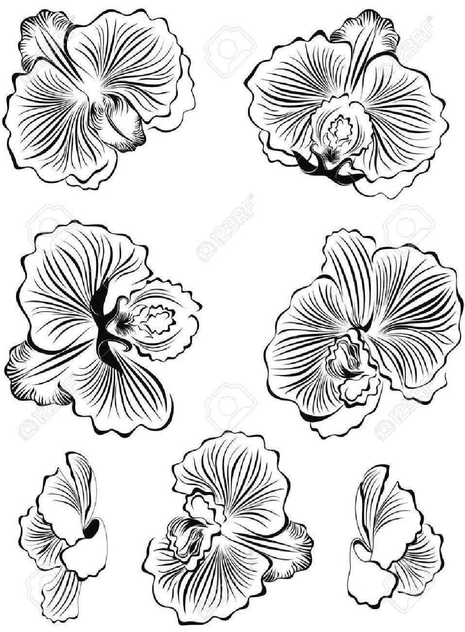 ensemble d'éléments de conception de fleurs noires orchidées clip