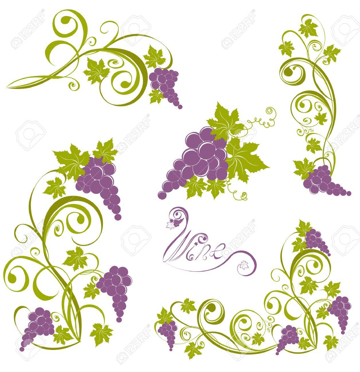 Grapevine isolated on a white. Wine design elements Stock Vector - 17474751