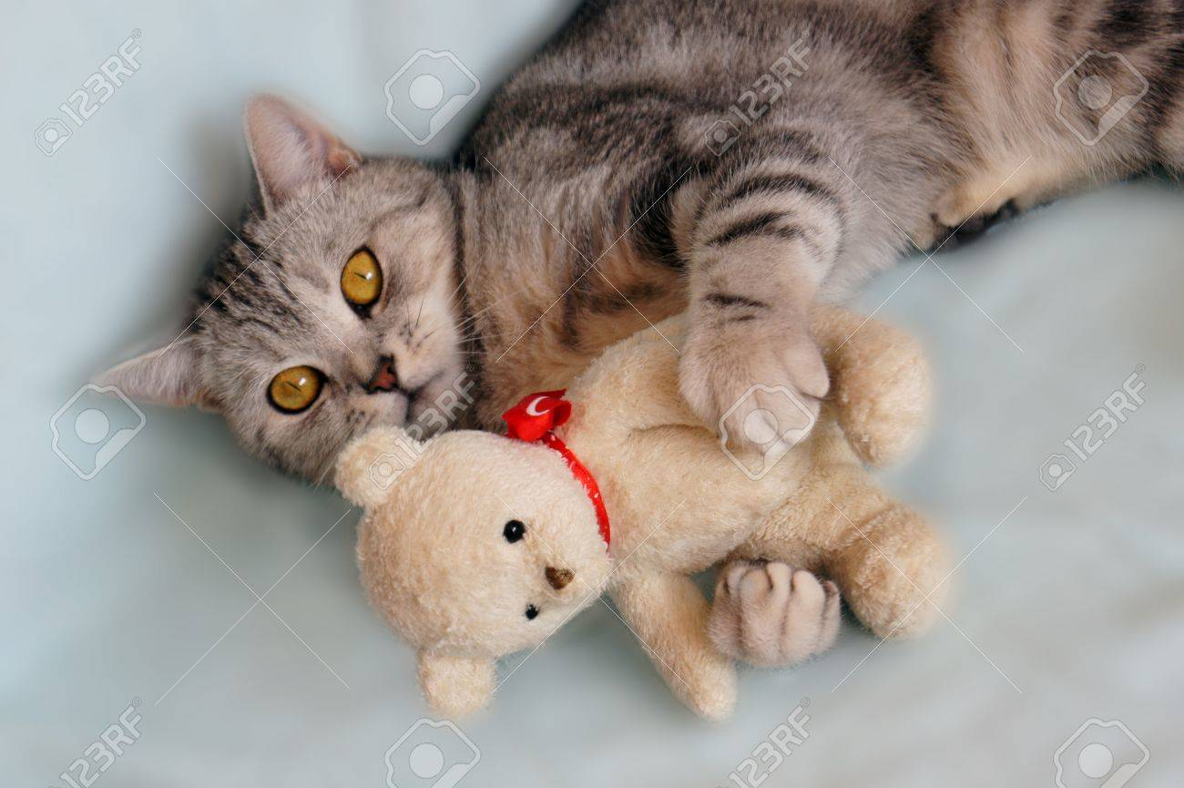 Cat With Teddy Bear Stock Photo Picture And Royalty Free Image