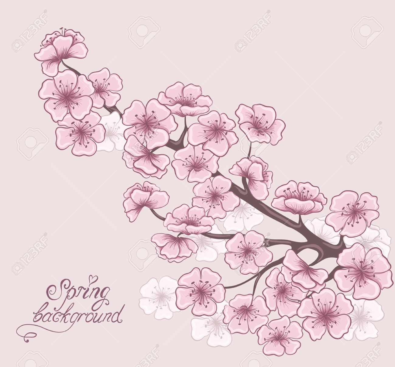 Cherry Branch In Blossom Decorative Spring Floral Background
