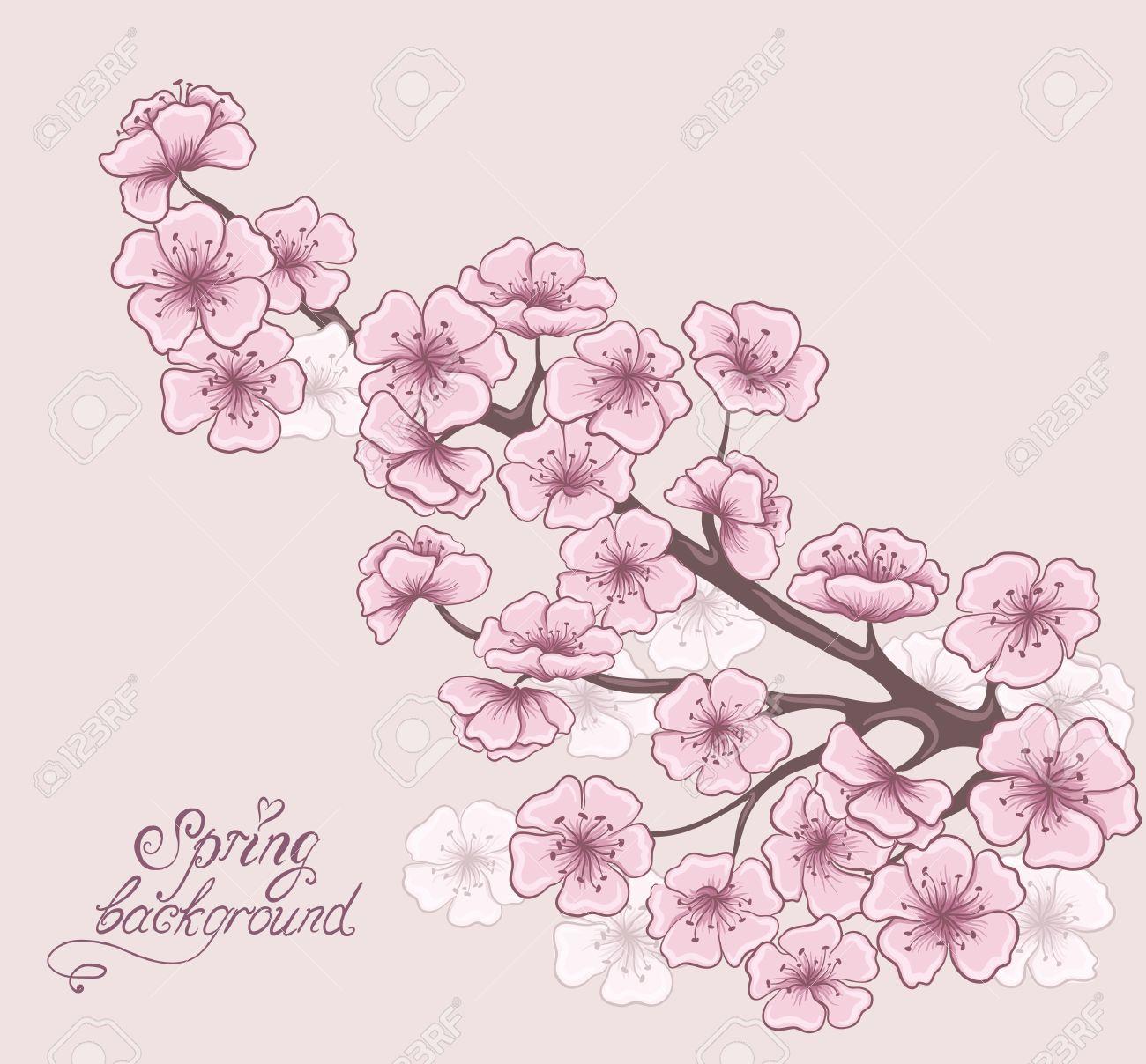 Rama De Cerezo En Flor Primavera Decorativo Floral De Fondo Dibujo