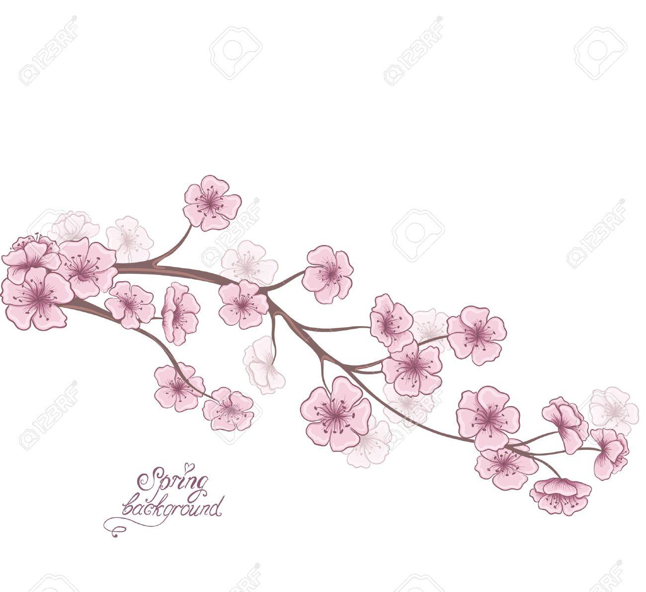 Branche De Cerisier En Fleurs Isole Sur Un Fond Blanc Decoratif