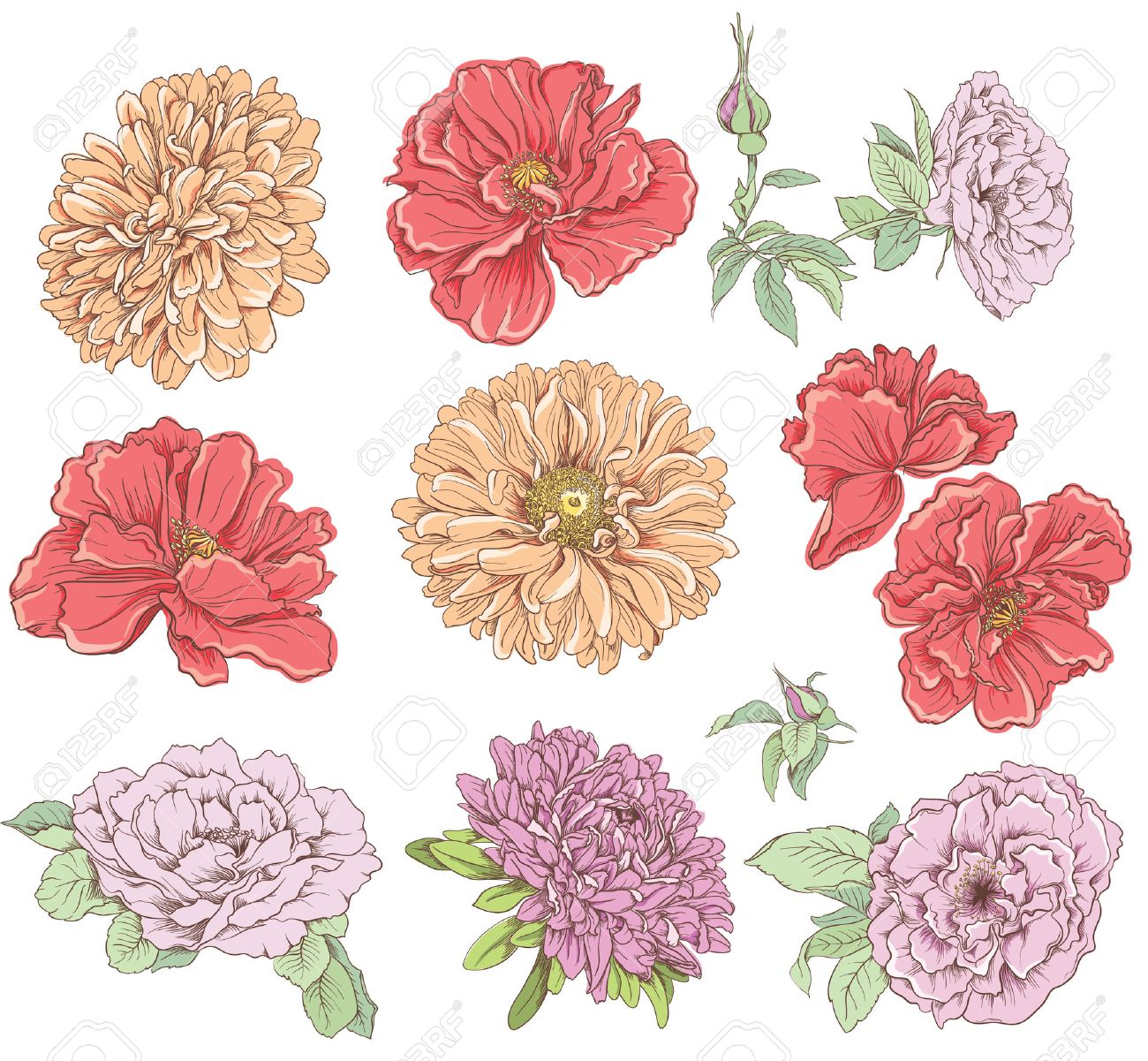 Set of vintage hand drawn flower Vector illustration Big selection of various flowers isolated on white background - 30649487