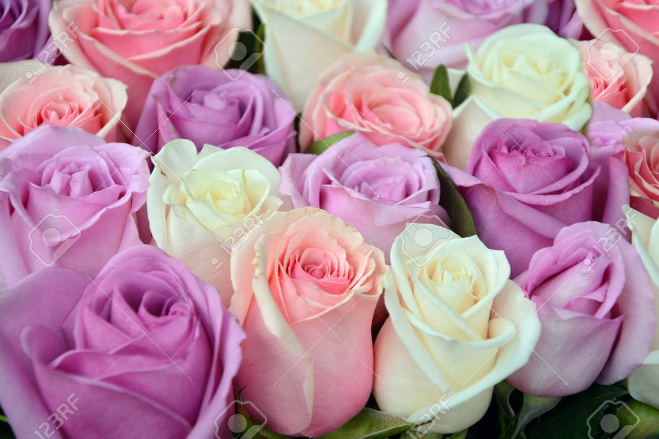 Pink And White Roses Background Stock Photo Picture And Royalty