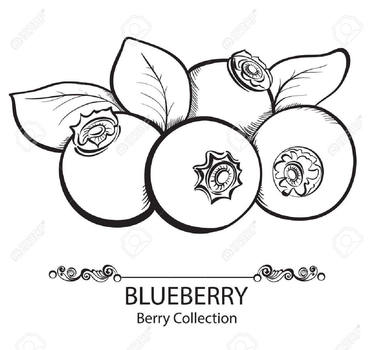 Stylized hand drawn black and white illustration of blueberry - 34923855