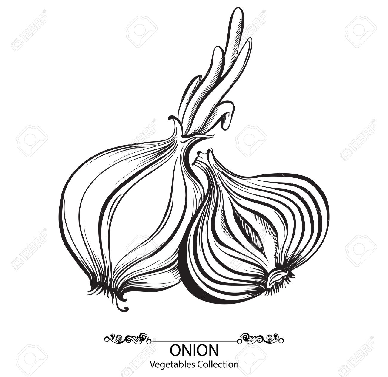 Sliced Onions Drawing Sliced Onion Onion Whole And