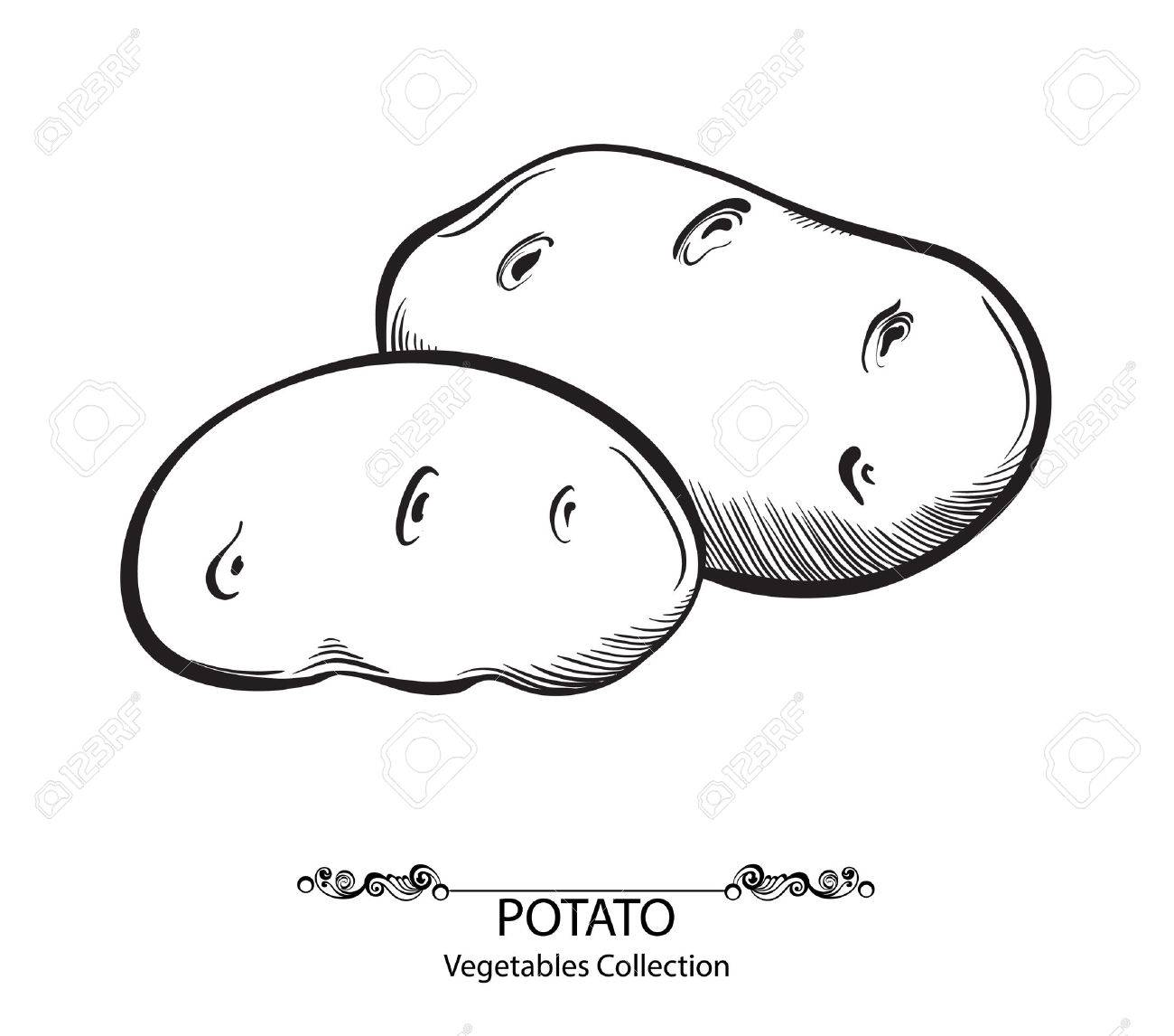 Potatoes. Vector hand drawn vegetables isolated on white background - 34923961