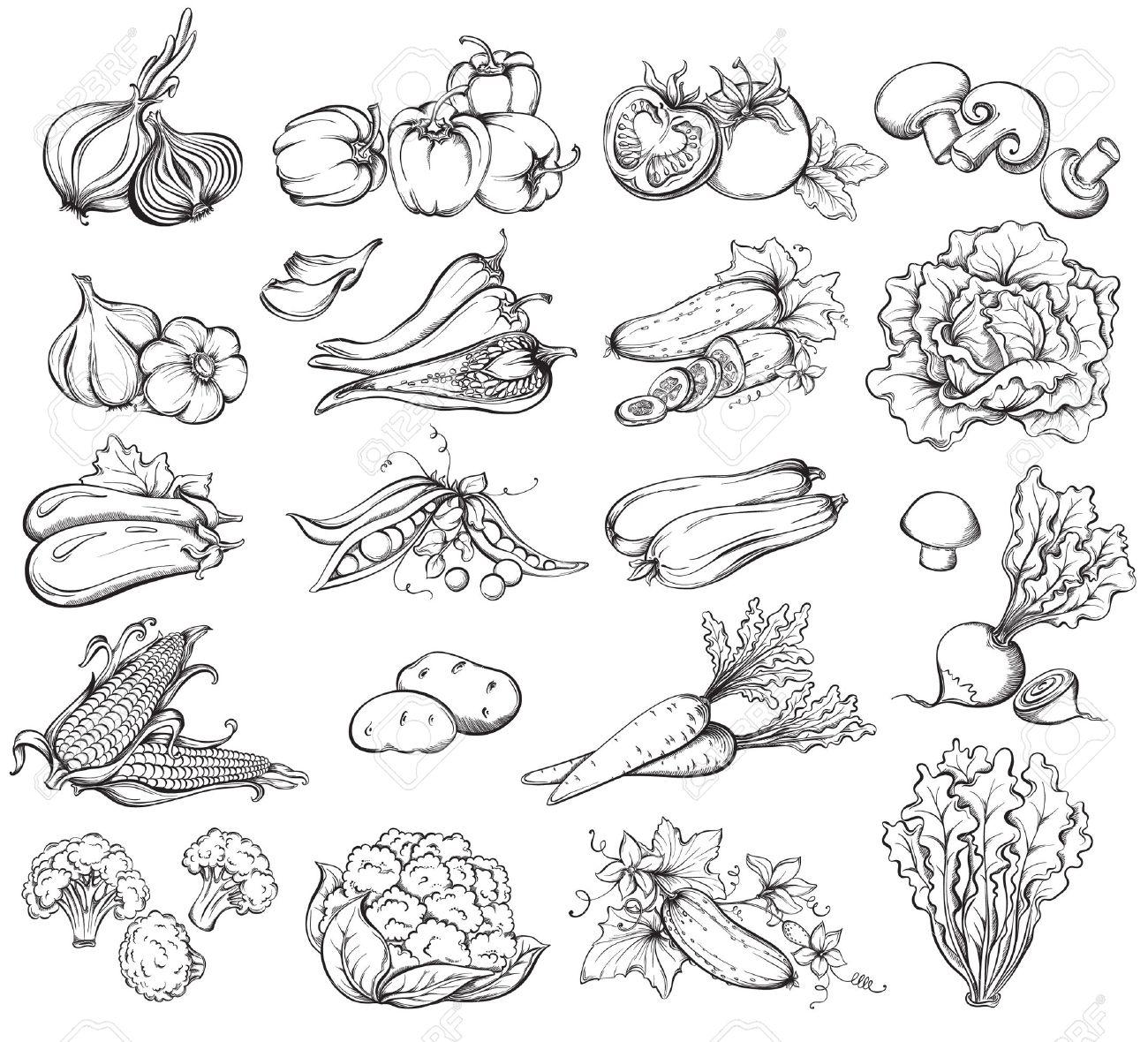 Hand Drawn Vegetables Set. Collection of Vegetables sketch. Vector illustration - 35652467